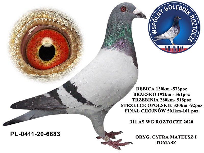 Zdjęcia gołębi, które pojawią się w najbliższym czasie na aukcji